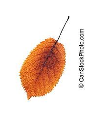 秋, さくらんぼ, シンボル, 葉, カラフルである