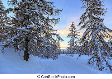 Winter forest in Alps near Vogel sky center in Slovenia,...