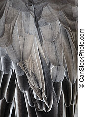 Bird wing detail texture