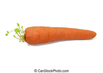 carota - The wild carrot is a herbaceous, somewhat variable...