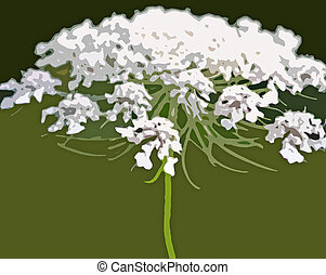 Queen Anne's Lace - Abstract of Queen Annes Lace - commonly...