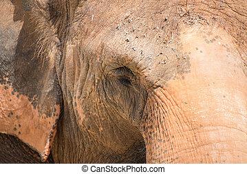 Close-up portrait of elephant's face.