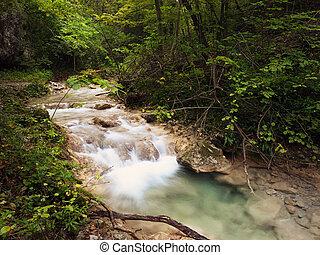 Beusnita - Details of Beusnita stream in Beusnita Natural...