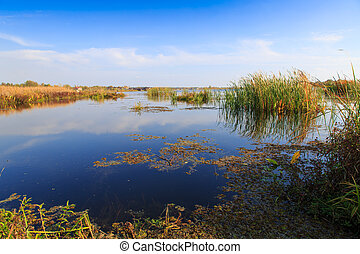 beautiful large lake with reeds in autumn season