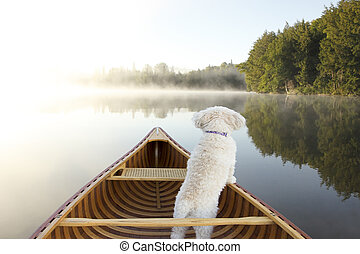 Dog Navigating From the Bow of a Canoe - Small White Dog...