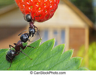 sweet summer - kissing garden ants and summerhouse at...