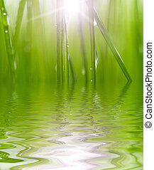 nature - fresh green grass reflected in water