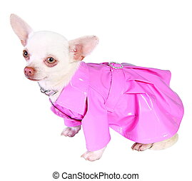 Dog in pink rain-coat isolated on white