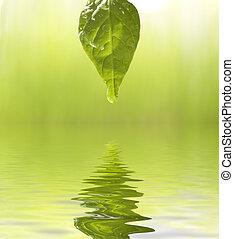 fresh - green leaf with dew drops