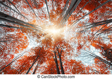 Upward view of colorful autumn trees in forest