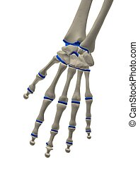 skeletal hand - 3d rendered illustration of human skeletal...