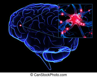 human brain - 3d rendered illustration of human brain with...