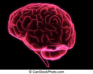 human brain - 3d rendered illustration of human brain