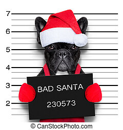 christmas mugshot - mugshot of a christmas santa bad dog