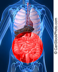 highlighted intestines - 3d rendered illustration of a human...