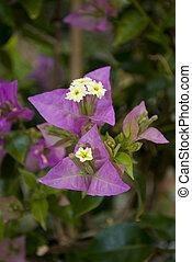 Purple flowers growing togheter in the garden