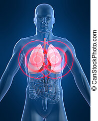 painful lung - 3d rendered illustration of a human anatomy...