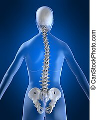 scoliosis - 3d rendered illustration of a body shape with...