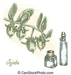 Jojoba fruit with glass bottles Hand drawn vector...