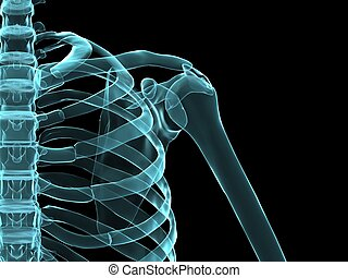 skeletal shoulder - 3d rendered x-ray illustration of a...
