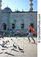 rubio, niña, El disturbar, palomas, Estambul,...