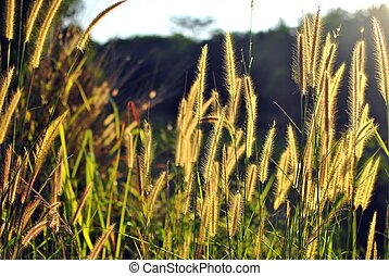 Flower grass - Beautiful flower grass in evening