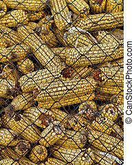 Corncobs - Pile of corncobs behing metallic grid