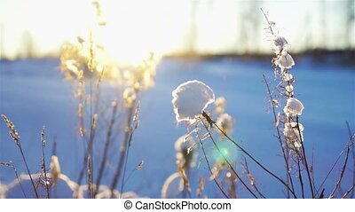 Snowdrift with dry grass close-up