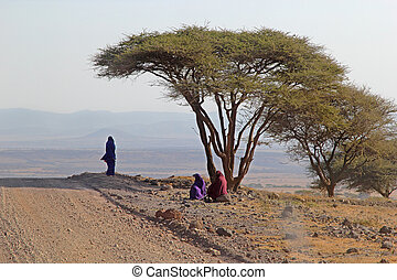 Group of Maasai under an acacia tree - A group of three...