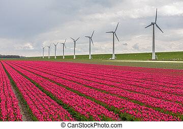 Dutch tulip field with a long row of wind turbines - Dutch...