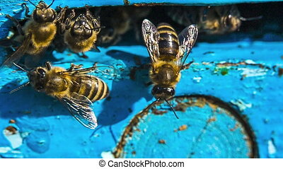 Bees At The Entrance To Hive