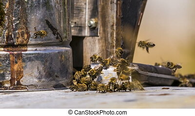 Bees Chasing Stranger - Close-up shot of a group of bees...