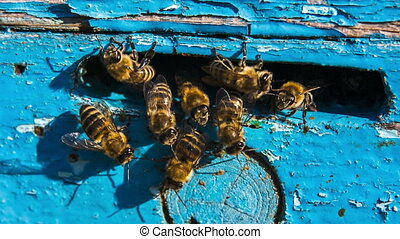 Group of Bees At The Entrance To Hive - Close-up shot of a...
