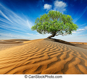 Lonely green tree in desert dunes - Life ecology solitude...