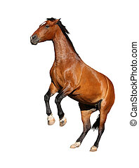 Brown horse rearing up isolated on white - Beautiful brown...