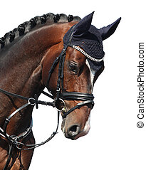 Brown sport horse portrait isolated on white close up