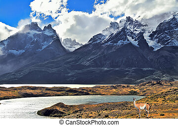 National Park Torres del Paine in Chile - Neverland...