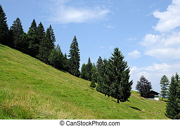 Trees in the Alps