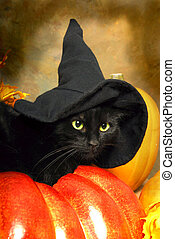 Black Cat Witch - A black cat wears a black witchs hat