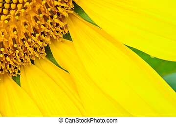 beautiful  sunflower  abstract background