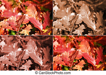 Autumn oak leaves in four variants
