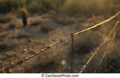 Barbed wire fence at sunset - Barbed wire fence with the sun...
