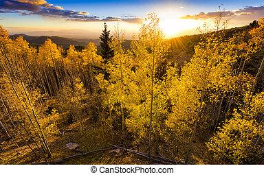 Golden Aspen Sunset - Vivid yellow-golden sunset over the...