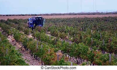 machine for picking up the wine grapes
