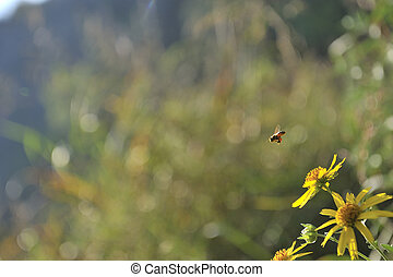 Bee flying - Bee hovering above flower shot close up with...