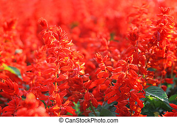 Red flowers in park in autumn time