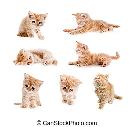 set of red cat isolated