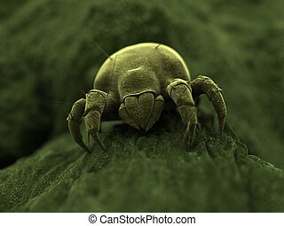 mite - 3d rendered close up of an isolated mite