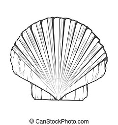 Sea Shell isolated on a white background Monochromatic line...