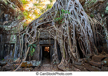 The ancient ruins and tree roots,of a historic Khmer temple...